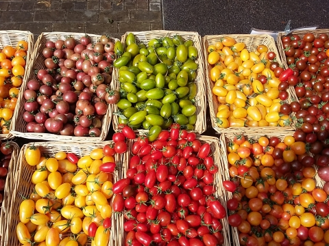 tomato varieties from Adrian Izzard at Wild Country Organics