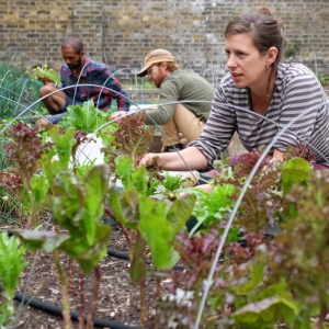 """urban farming"", ""growing communities"""