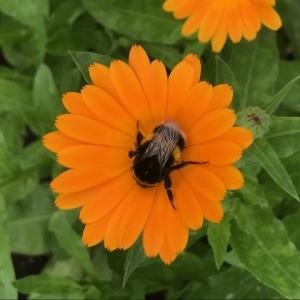 patchwork farm bee