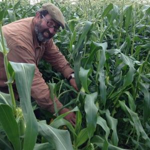 Jono ripple farmcorn field