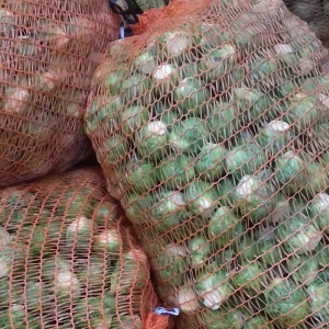 sprouts in sacks