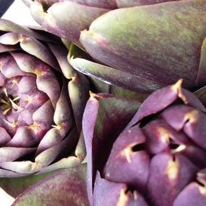 organic globe artichoke