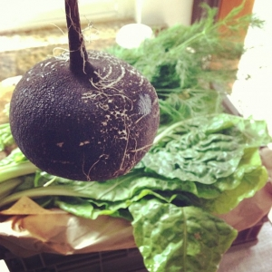 black radish from growing communities organic veg scheme