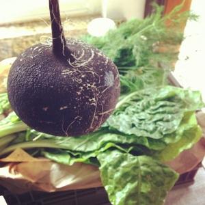 black radish from growing communities organic veg scheme