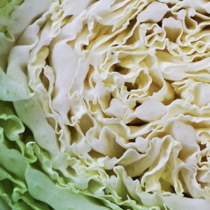 cabbage sliced