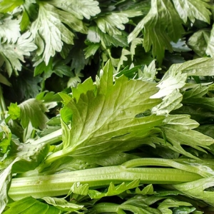 green celery leaves