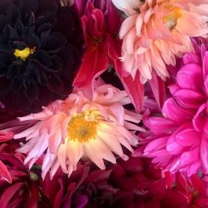 various flowers dahlia