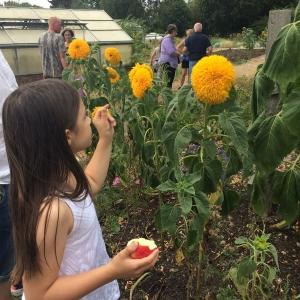 Dagenham Farm visits open farm sunday