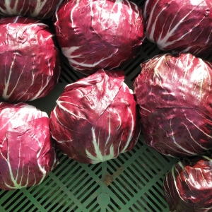 What to do with Radicchio