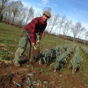 Ripple Farm Organics leeks