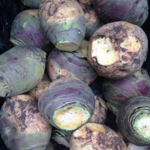 Swede root vegetable